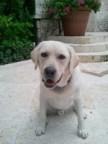 Caesar, Irina Shayk's dog