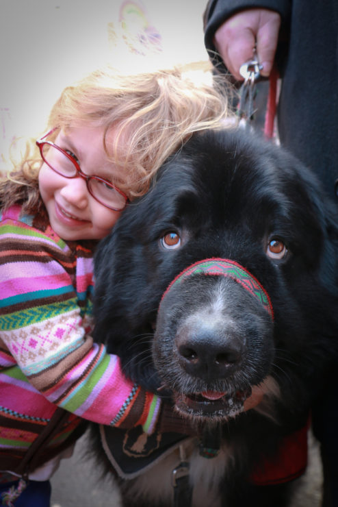 newfoundland dog and girl