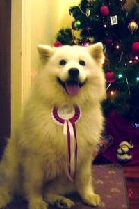christmas rescue dog