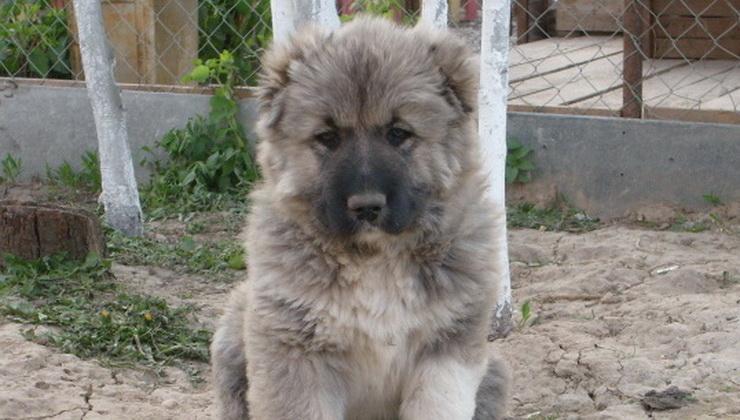 caucasian dog puppy girl