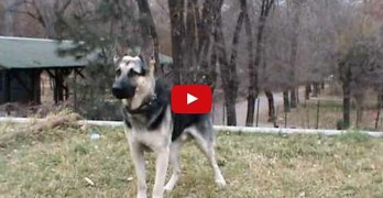east european dog training video