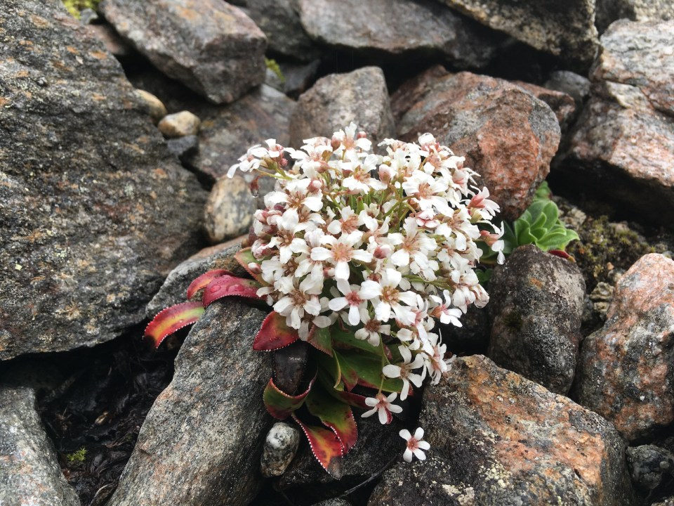 Flowers on the sidelines in the mountains