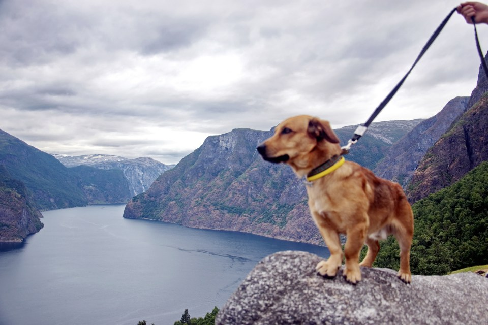 fjord and a dog