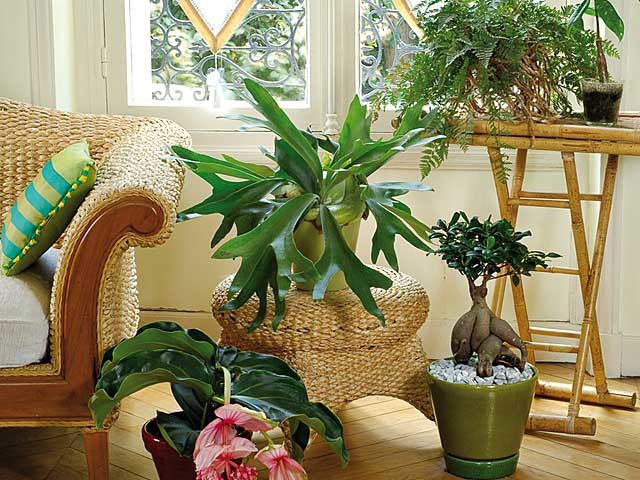 Choisir Les Plantes Depolluantes Pour Chaque Piece De La Maison