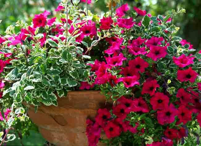 plantes et feuilles pour jardinieres