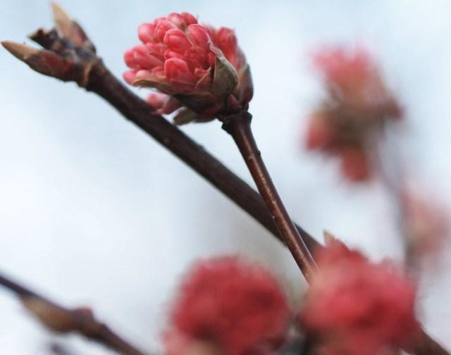 Roze bloemknopje - Even niet meer