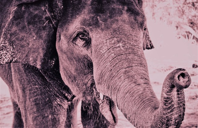 Roze olifant - rust in mijn hoofd coaching