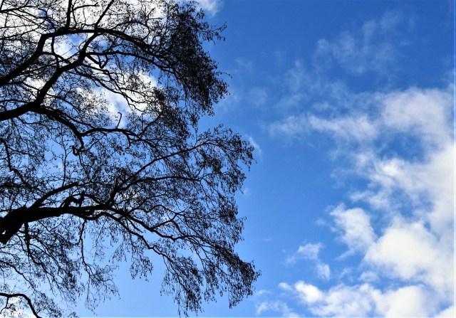 Kale boom tegen blauwe lucht met witte wolken