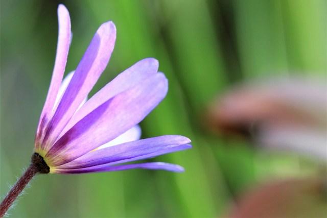 Paarse bloem - Nee zeggen - www.rustinmijnhoofd.nu