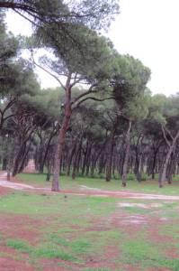 Pinar de San Jose Madrid (2)