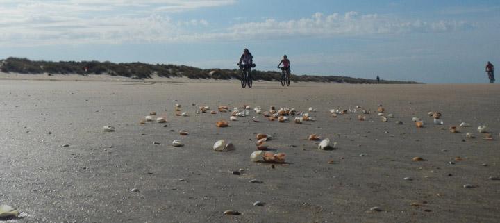 En bici por Parque Nacional de Doñana
