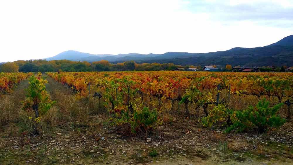 viaje en bici por los viñedos navarros