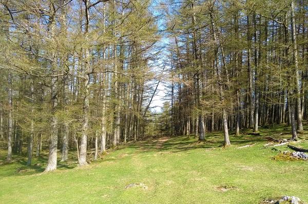 Entrada al bosque tras seguir el poste indicativo de Ibañeta