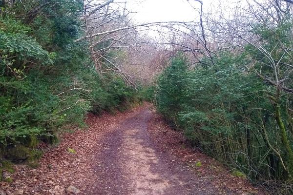Precioso sendero rodeado de vegetación