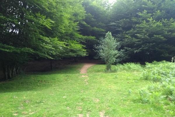 Senda de inicio de la ruta adentrándonos en el bosque