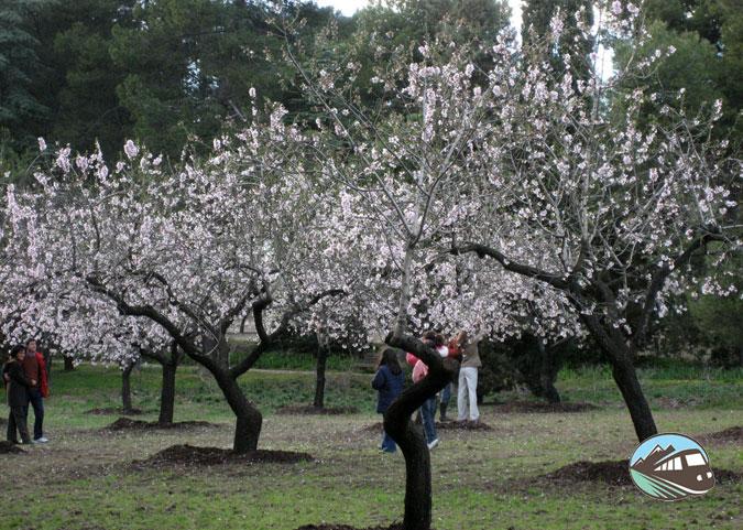 Quinta de los Molinos - Madrid