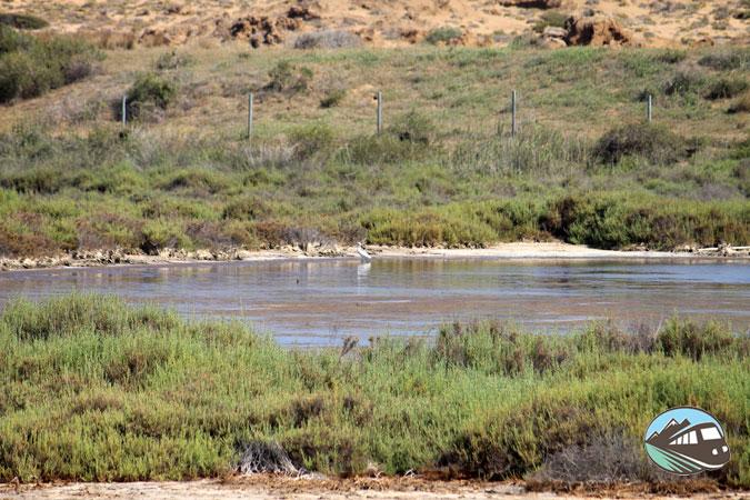 Salinas de Calblanque
