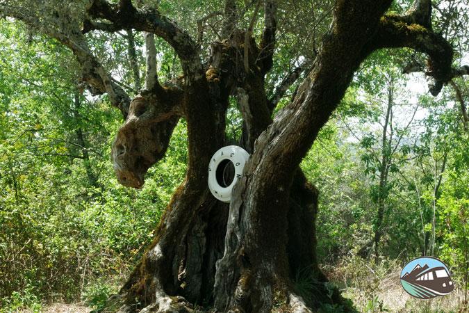 Dragón Milenario - Camino-Prodigios