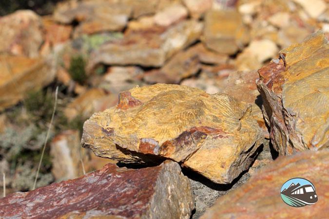Alguno de los fósiles que nos encontramos - Valle de Alcudia
