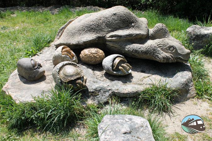 Tortugas con sus crías - Camino de los Prodigios
