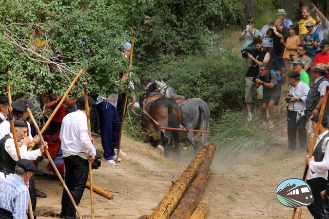 Saca de troncos - Fiesta de los gancheros
