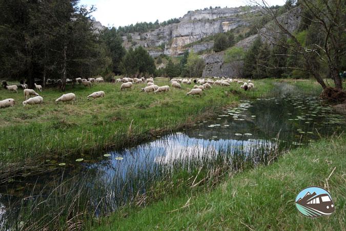 Paisaje ovejero - Cañón del río Lobos