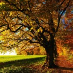How To Get Focused and Keep Motivated During Autumn