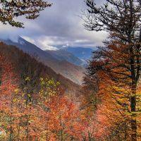 Fotos del otoño