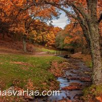 El Castañar de El Tiemblo en otoño