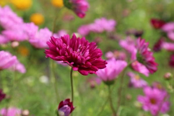 flower-408833_1280