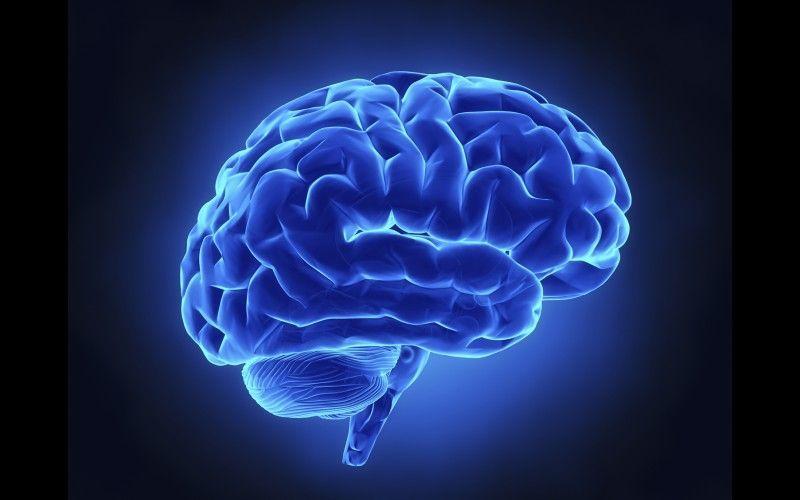 Le Cerveau Dfinition Et Comment Il Commande Les