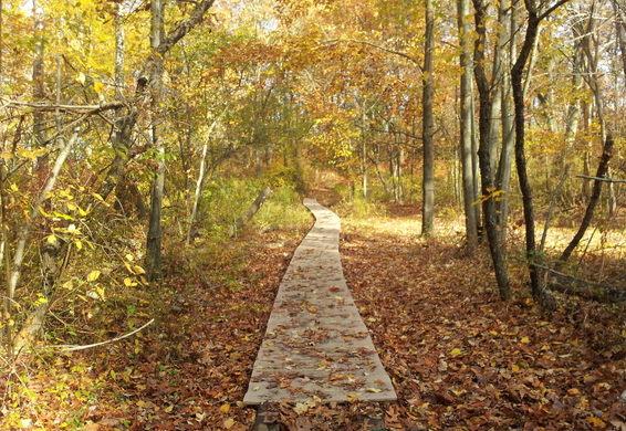 Neutaconkanut Hill Park- Providence, Rhode Island