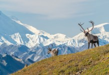 Best Things to Do in Alaska