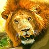 Lion kenya guide