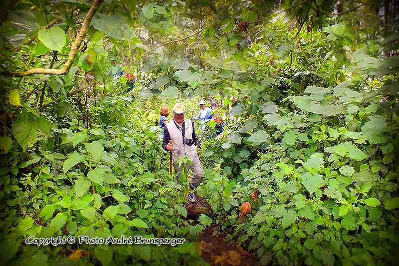 Forêt de Bwindi - Circuit safari 7 jours Ouganda
