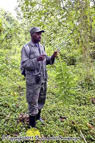 Forêt de Nyungwe Rwanda circuit safari 8 jours Rwanda