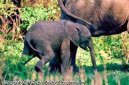 Eléphants - Circuit safari 12 jours Rwanda Ouganda