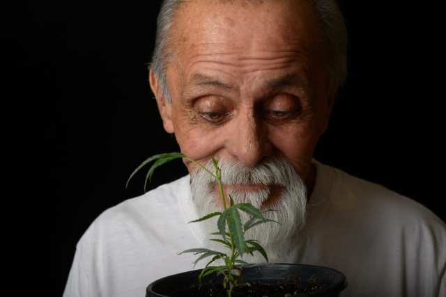 Happy senior growing his own cannabis medicine
