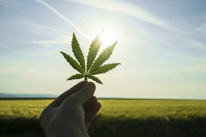 Cannabis Leaf against a sunny rise