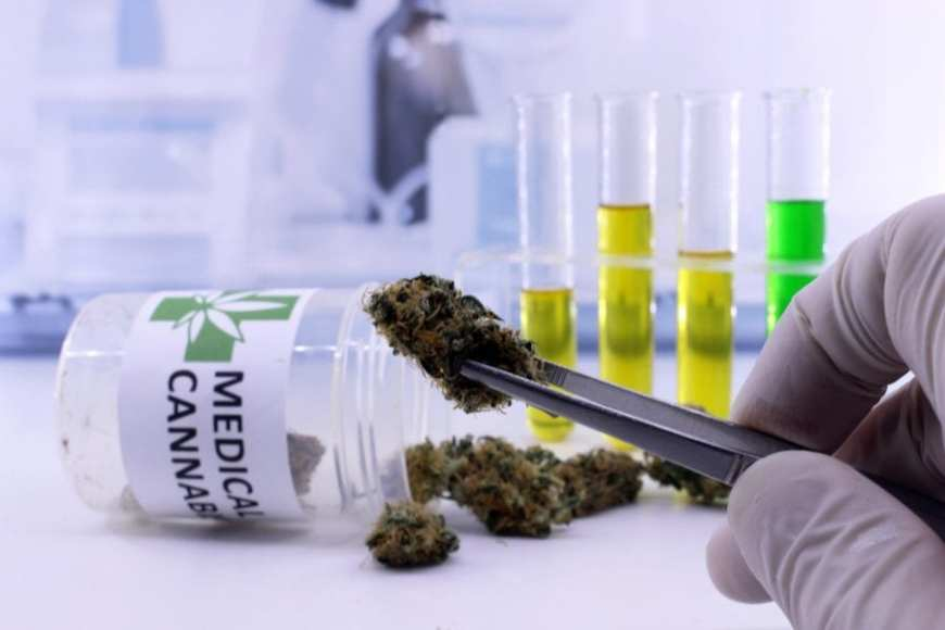 Gloved hand putting cannabis nugs that might be reversing arthritis into prescription bottle