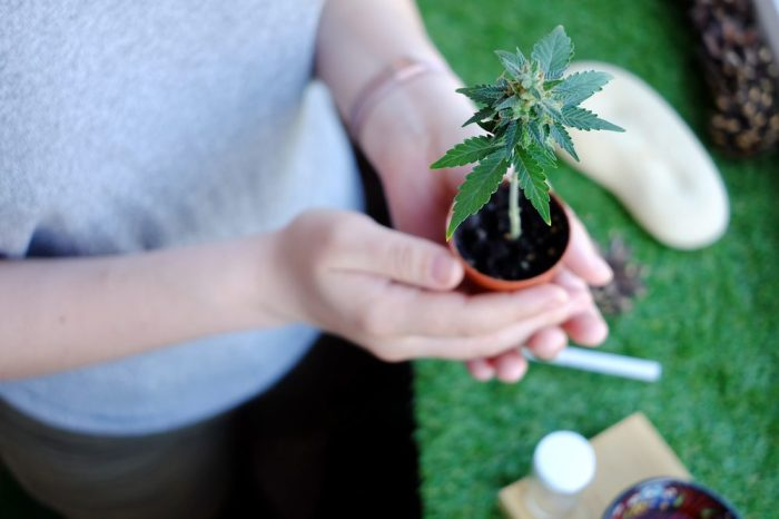 cannabis plant which may help with seizures