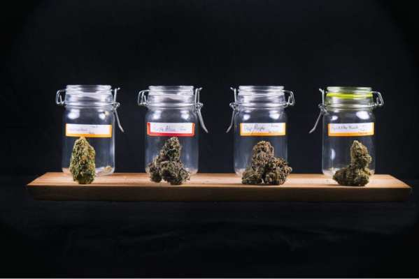 Glass mason jars filled with cannabis buds