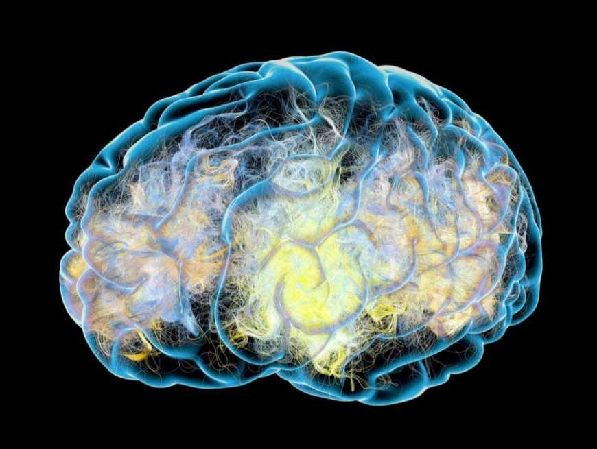 Dopamine in the brain