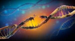 cannabis, high iron levels, toxic iron, DNA, DNA damage, heart disease, neurodegenerative disease, dementia, medical cannabis, cardiovascular disease