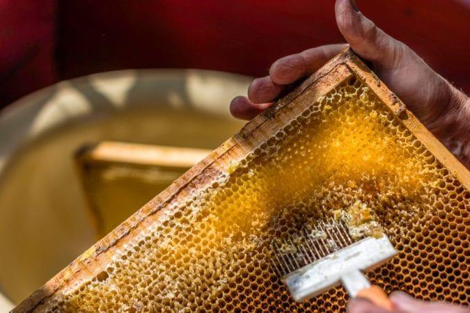 cannabis, honey, honey comb, cannahoney, bee keeper, bee trainer, cannabis products, recreational cannabis, medical cannabis, legalization