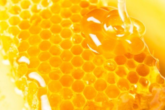 cannabis, cannahoney, honey, bees, bee hives, bee keeper, bee trainer, legalization, medical cannabis, recreational cannabis