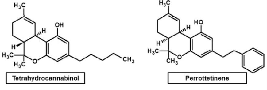 THC and PET chemical makeup
