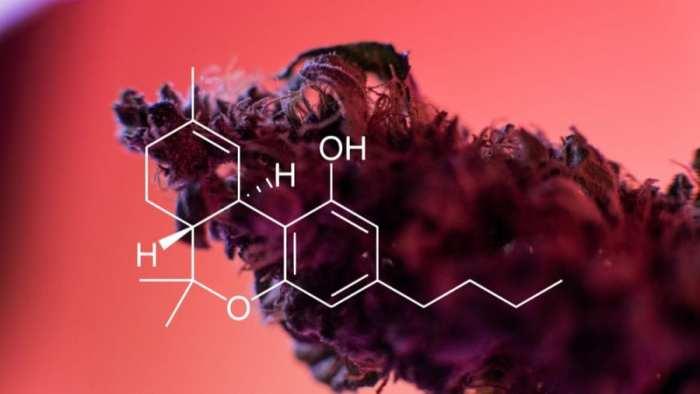 cannabis, cannabinoids, CBD, THC, endocannabinoid system, endometriosis, hormones, research, women, anandamide