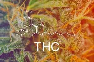 cannabis, CBD, THC, cannabinoids, cancer, cannabinoid receptors, endocannabinoid system, immunotherapy, DNA, cancer cells