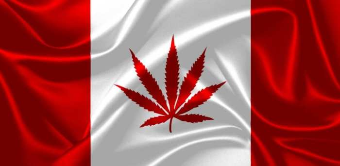 cannabis, Canada, USA, hemp, hemp plants, trade, legalization, agriculture, farmers, hemp products